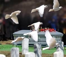 1288137548_132349584_1-Pictures-of--White-Dove-Release-for-Weddings-Funerals-and-Special-Events-1288137548