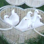 doves in a basket